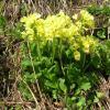 fleur-jaune_1799849173_o