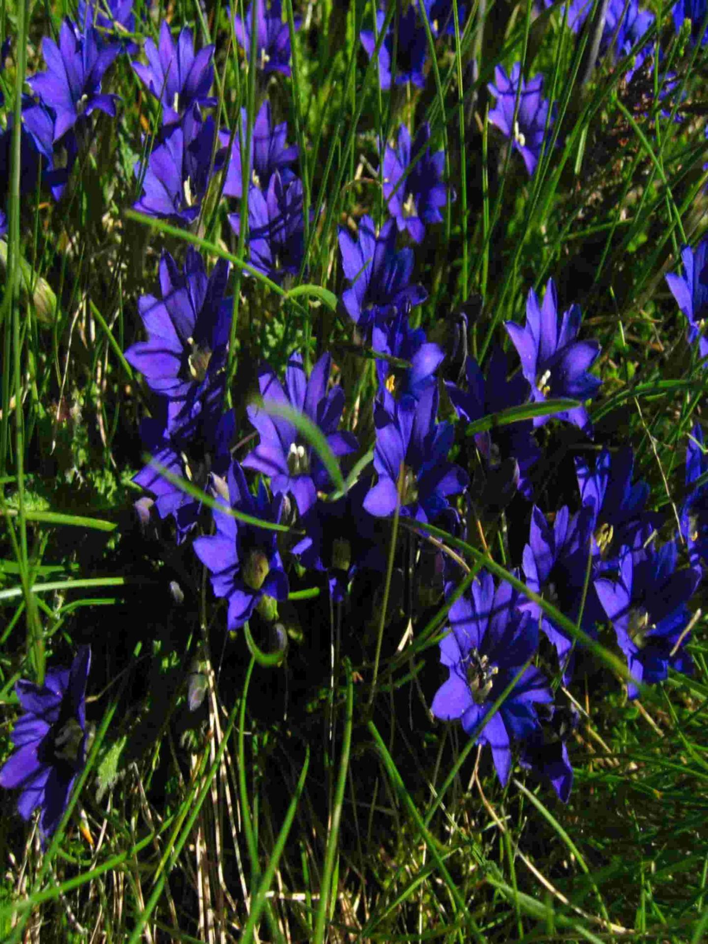 2005 flore du sisca pedourrs 2179379811 o