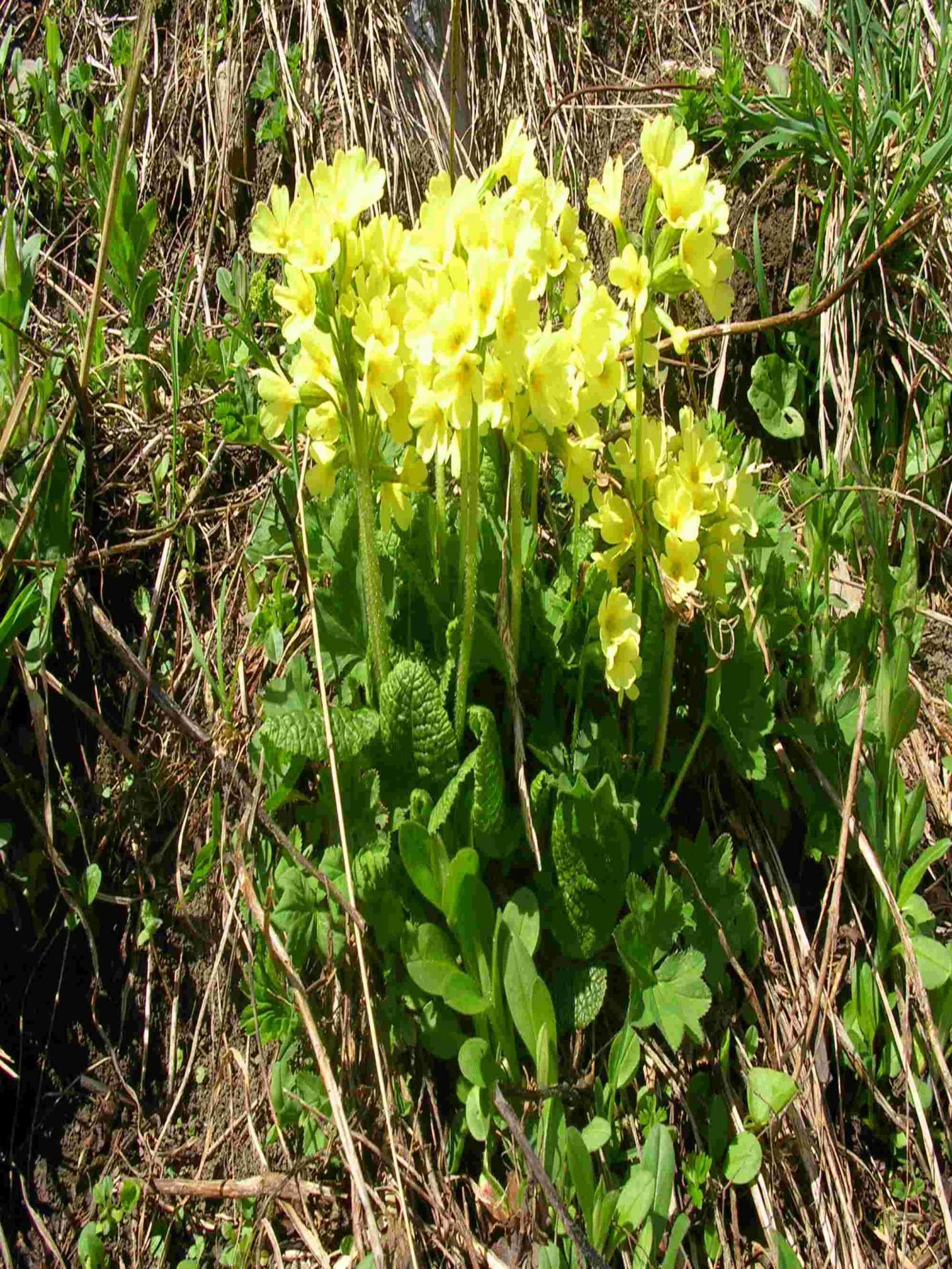 Fleur jaune 1799849173 o