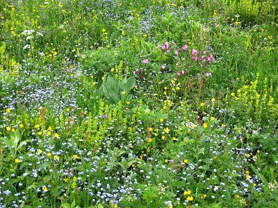 Fleurs des champs 5757573879 o opt